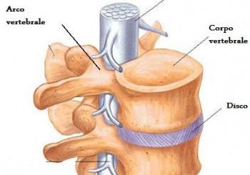 Carichi sulla colonna vertebrale